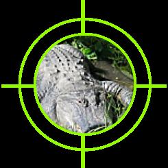 Punta Gorda Gator Hunt